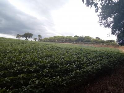 CHACARA  PROXIMO AO CENTRO